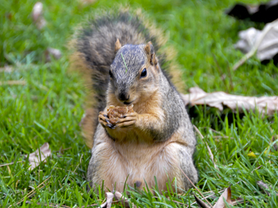 Confessions of an Obese Squirrel